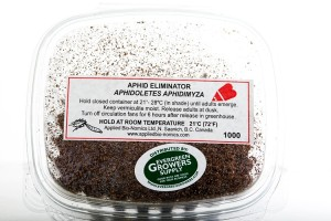 aphidoletes_aphidimyza_-_evergreen_growers_supply