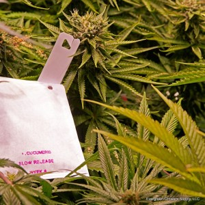 slow_release_a-_cucumeric_bag_-_medical_marijuana_-_evergreen_growers_supply_llc_1_1